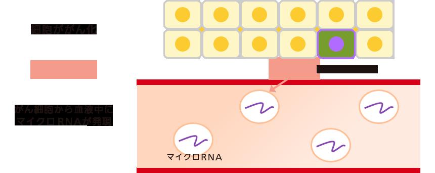 早期発見・発症リスク検査 マイクロRNA解析のリスク検査 ミアテスト®-乳がんリスク検査-とは